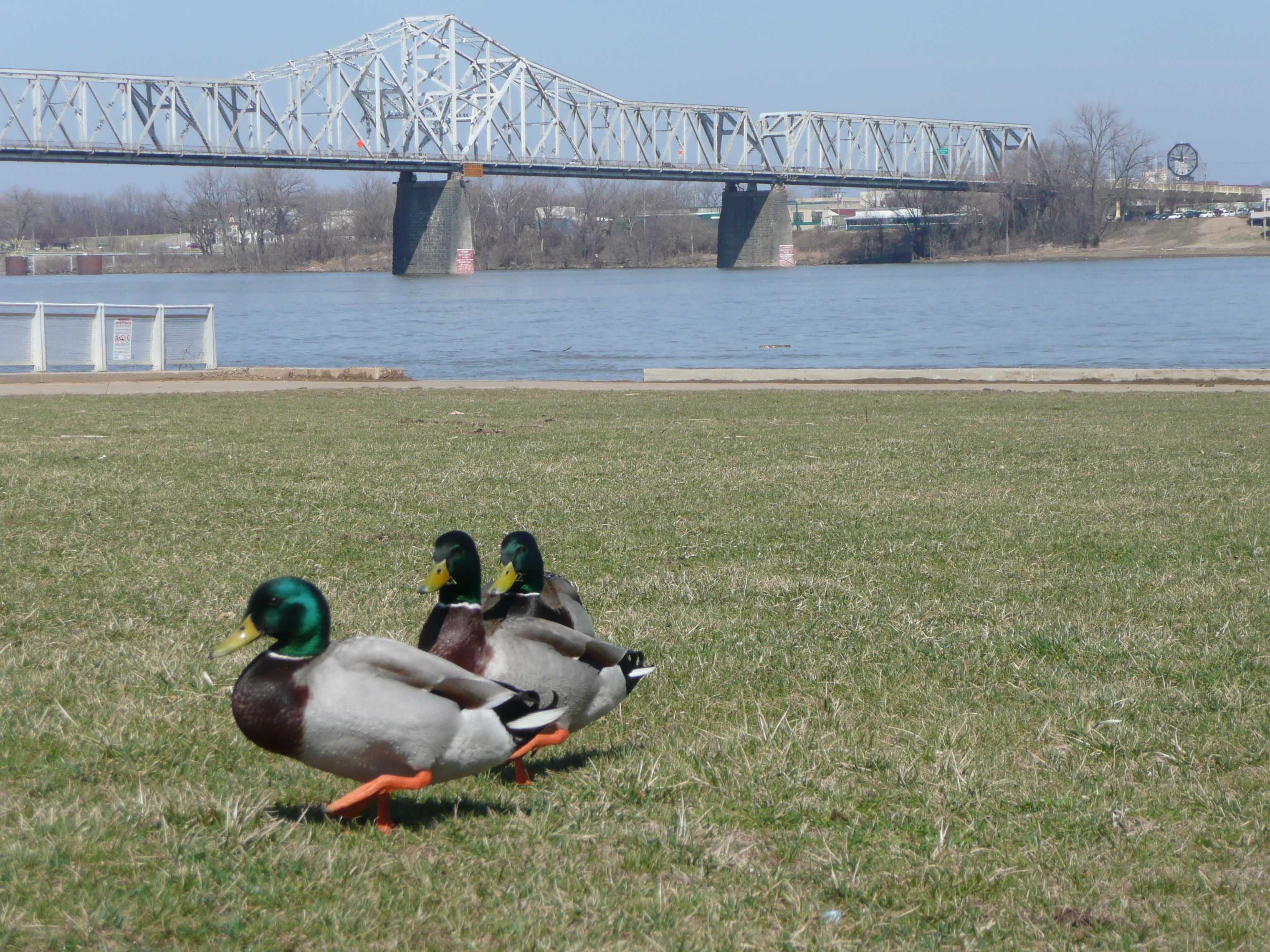 Waterfront park, located between the John F. Kennedy (Interstate 65) and George Rogers Clark Memorial (Second Street) bridges.