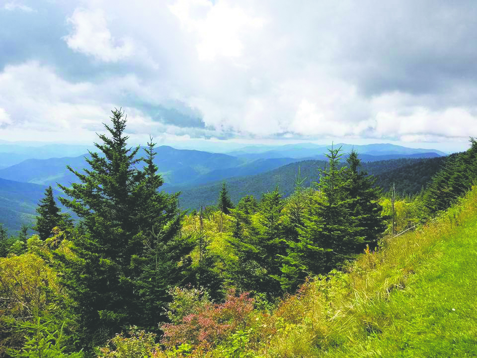 Great Smoky Mountains National Park. Photo by Shannon Greer