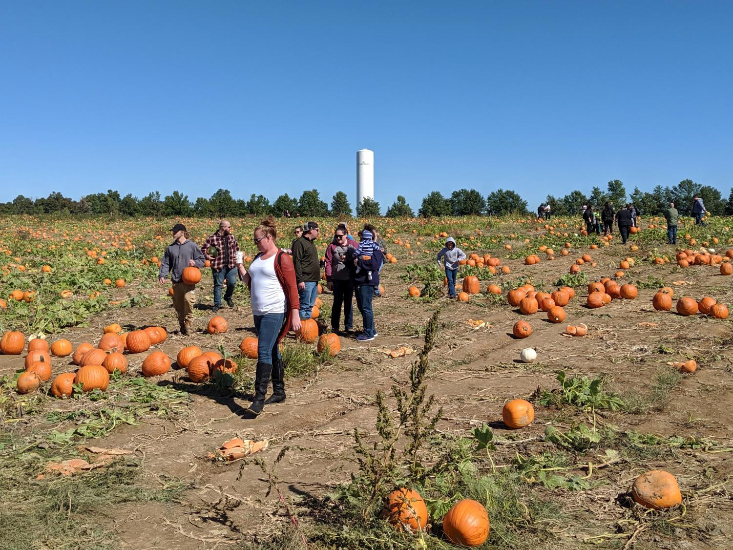 The Starlight water tower overlooks a pumpkin patch as families search diligently for the perfect pumpkin